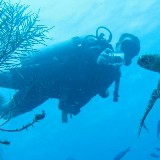 An image of diver2diver